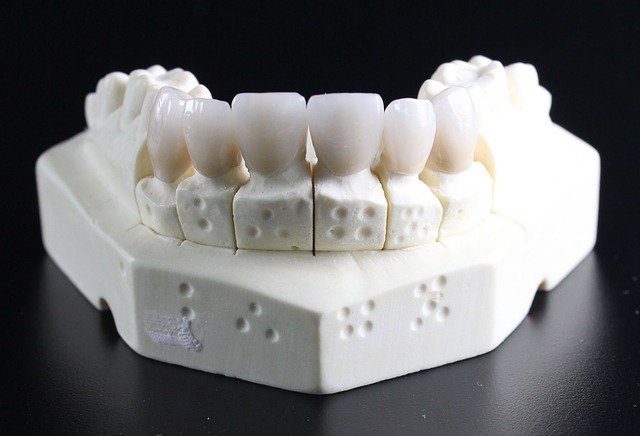 下顎付き歯の模型